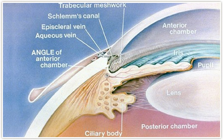 Open Angle Glaucoma Treatment Detroit
